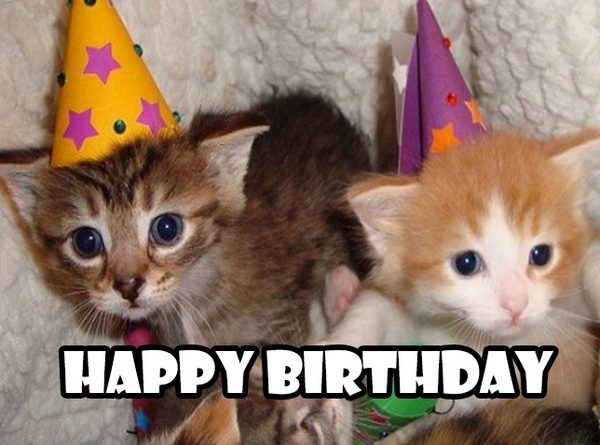 Funny Happy Birthday Cat Meme